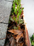 Gutter Cleaners Rain Gutter Cleaning Services San Jose